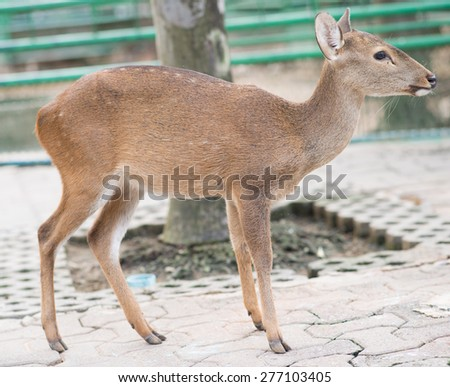 Deer stand on a cement floor. - stock photo