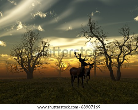 Deer sunset - stock photo