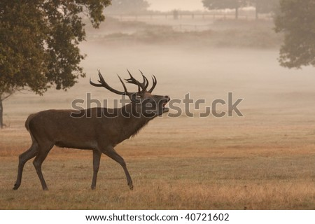 Deer, with antlers, in silhouette - stock photo