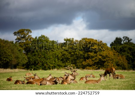 Deers in a park - stock photo