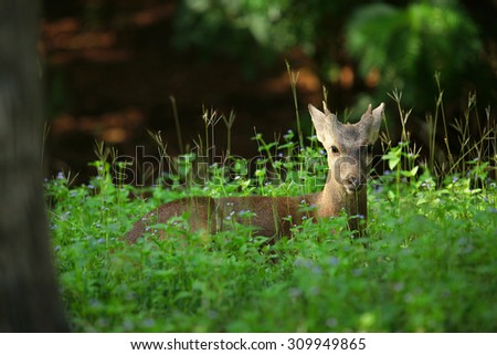 Deers look at the camera. - stock photo