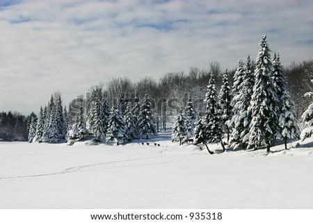 Deers Walked  Across a Frozen Lake - stock photo