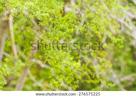 Defocus nature green bokeh, Defocused abstract nature background with green leaves and bokeh lights.