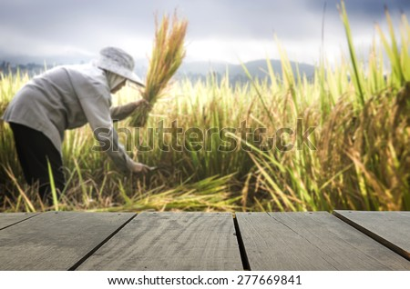 Defocused and blur image of terrace wood and farmers harvesting rice in rice field for background usage - stock photo