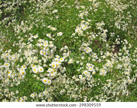 Defocused and blur the small white daisy flowers in green grass was blurred for use as a background - stock photo