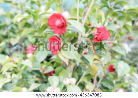 Defocused background of beautiful red camellia flowers inside a greenhouse. Intentionally blurred post production for bokeh effect