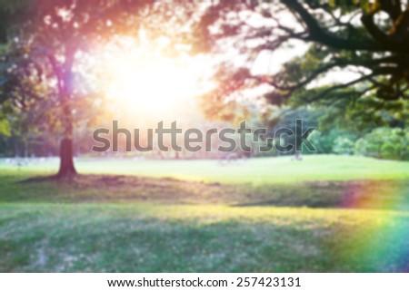 Defocused beautiful sunrise at park - stock photo