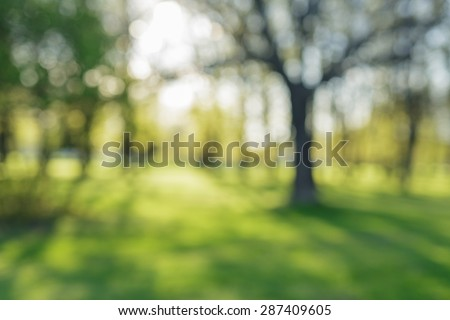 defocused bokeh background of apple garden with blossoming trees  in sunny day, backdrop - stock photo
