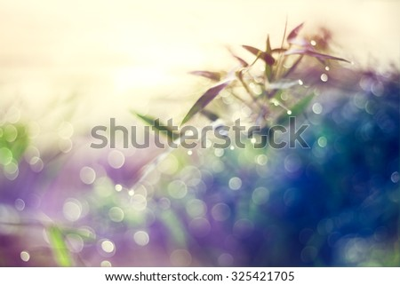 Defocused Bokeh, twinkling lights vivid color blurred bokeh spring from bamboo leaf background. Abstract nature and soft tone color style. - stock photo