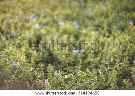 defocused violet flowers abstract nature background with green leaves violet flowers and bokeh light - stock photo