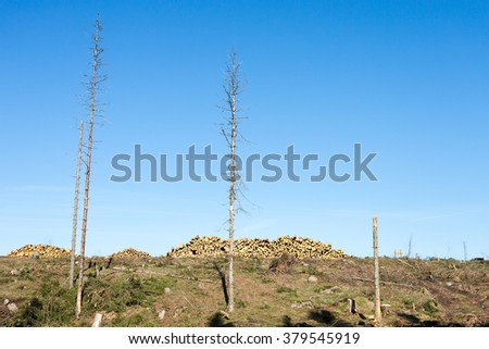 Deforestation area with timber in heaps - stock photo