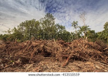 Deforestation environmental damage Indonesia rainforest - stock photo