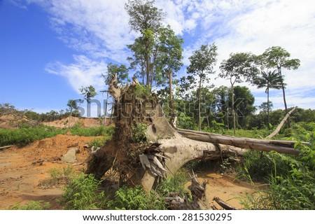 Deforestation environmental destruction of rainforest  - stock photo