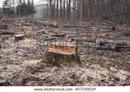 deforestation environmental disaster