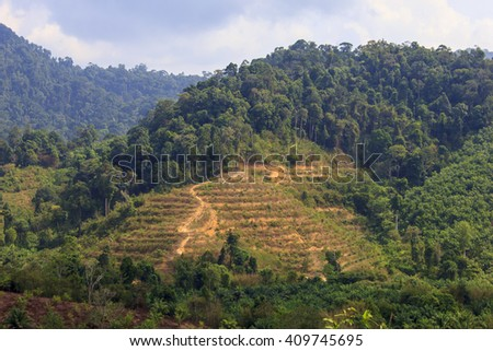 Deforestation: Environmental problem of rainforest destroyed to make way for oil palm plantation - stock photo