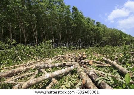 Deforestation Environmental Problem Rain Forest Destroyed Stock ...