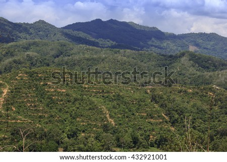 Deforestation environmental problem. Rainforest jungle in Borneo with patches cleared and planted with oil palms. - stock photo