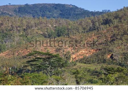 Deforestation in a jungle in Timor Leste - stock photo