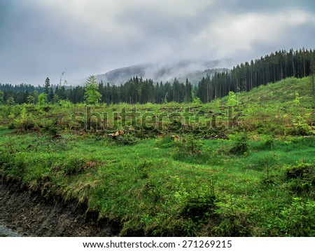 Deforestation in mountain forest - stock photo