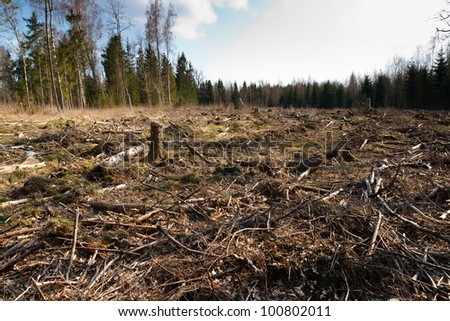 Deforestation.Landscape of cut forest
