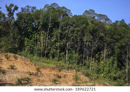 Deforestation of Borneo rain forest for oil palm plantations - stock photo