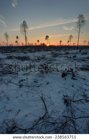 Deforested area in a forest with branches in the foreground - stock photo