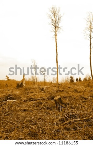 Deforested, disafforested, destroyed, desolated forest.