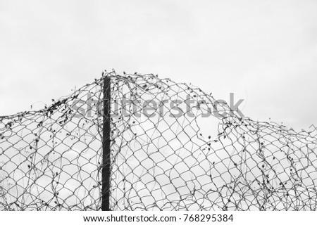 Deformed Wire Netting Holes White Overcast Stock Photo 768295384 ...