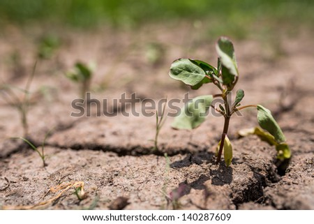 dehydrated dry small plant on dry soil - stock photo
