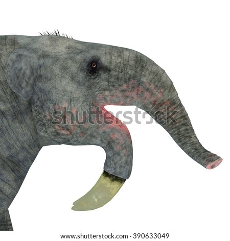 Deinotherium Mammal Head - Deinotherium was an enormous land mammal that lived in Asia, Africa and Europe during the Miocene to Pleistocene Periods.