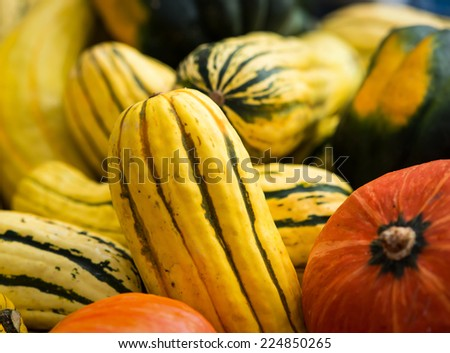 Delicata squash with some pumpkins at an October farmer's market. - stock photo