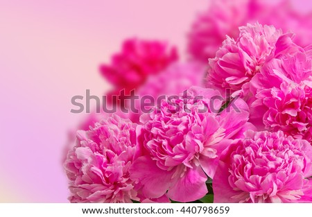 Delicate big bouquet of  pink peonies in a high key, close-up. Festive floral background - stock photo