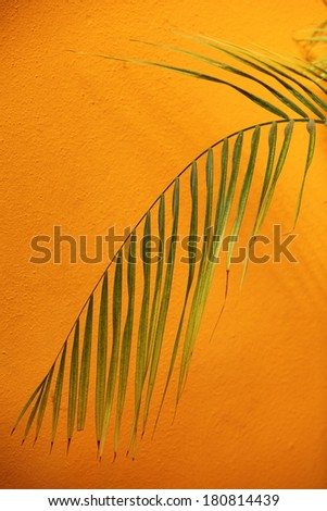 Delicate drooping green palm frond against a textured orange wall with copyspace conceptual of a spa treatment or a tropical vacation - stock photo