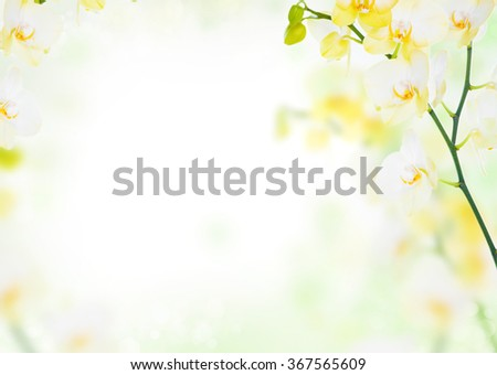 Delicate flower floral background of yellow orchids - stock photo