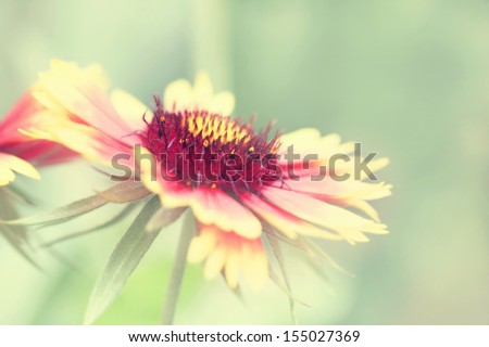 delicate flower in vintage style - stock photo