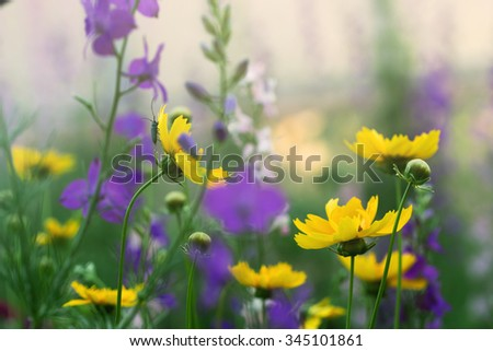 delicate flowers, misty morning in a garden - stock photo