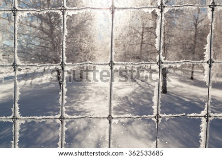 Delicate ice crystals growing on a fence with a blurred background of a birch tree farm in winter. - stock photo