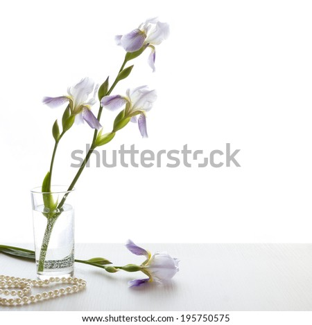 Delicate Irises in transparent glass with water on white background - stock photo
