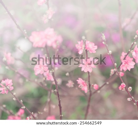delicate pink flowers on a tree - stock photo