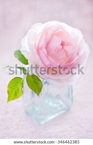 Delicate pink rose in a glass vase on a table. - stock photo