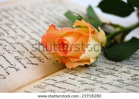 Delicate rose on a handwritten German book from the 19th century
