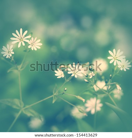 Delicate vintage background with wildflowers - stock photo