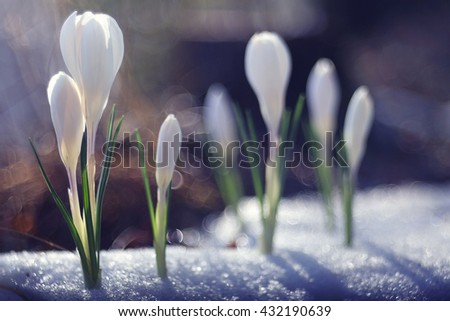 delicate white flowers spring background - stock photo