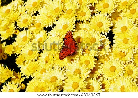 Delicate wings on summer petals - stock photo