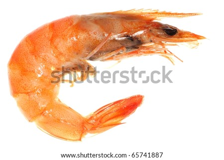 Delicious boiled shrimp isolated in white - stock photo