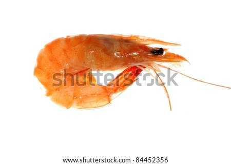 Delicious boiled shrimp isolated in white