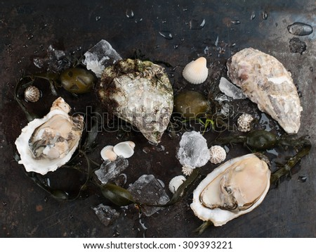 Delicious fresh oysters on dark vintage background, selective focus  - stock photo