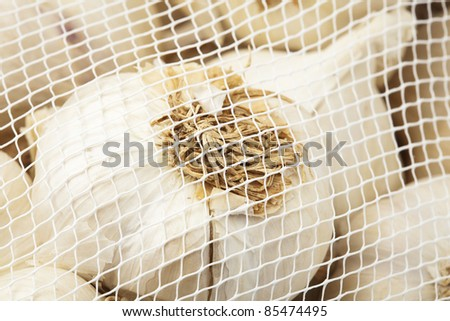 delicious garlic bulbs pack, extreme closeup photo