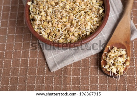 delicious lentil sprouts ready to be eated - stock photo