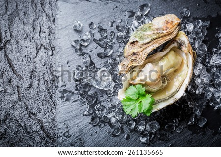 Delicious oyster in shell on ice - stock photo